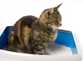犬や猫用の利尿剤・ラシックス