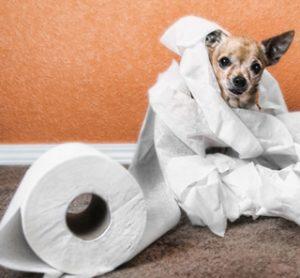 プロパリンシロップの通販価格?犬猫用尿漏れや尿失禁の治療薬